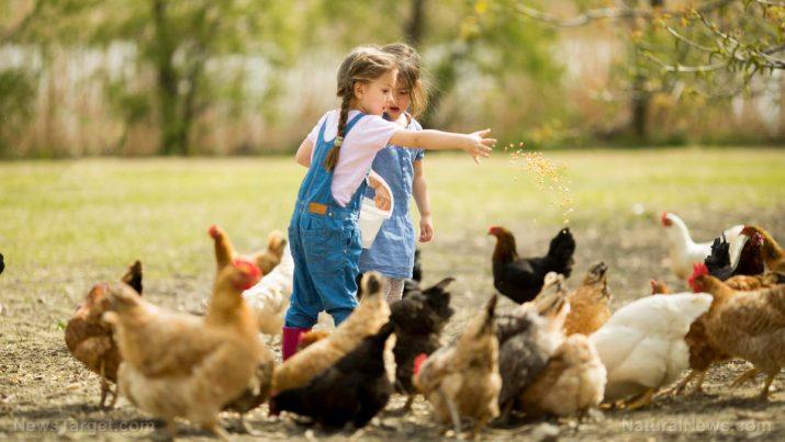 Resultado de imagem para kids with farm animals